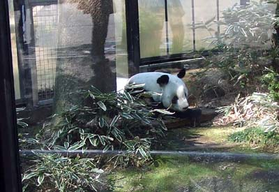 上野動物園 (23).jpg