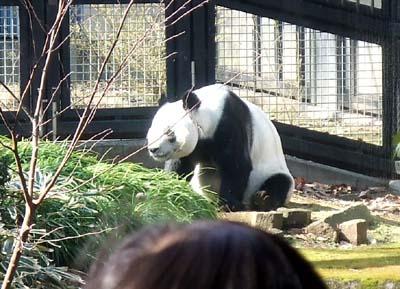 上野動物園 (75).jpg