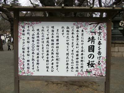 靖国神社 桜開花 (17).jpg