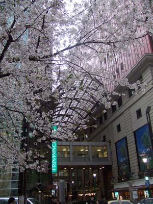 天神の桜 (14).jpg