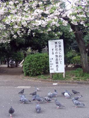 上野 (11.jpg