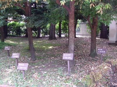 郷土の森 (11).jpg