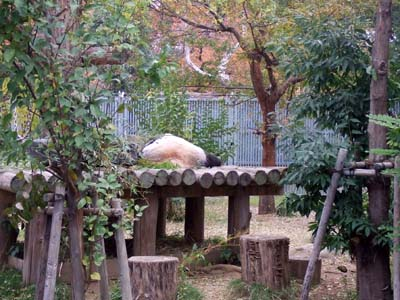 王子動物園.jpg