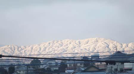 雪の福岡 [450px].jpg