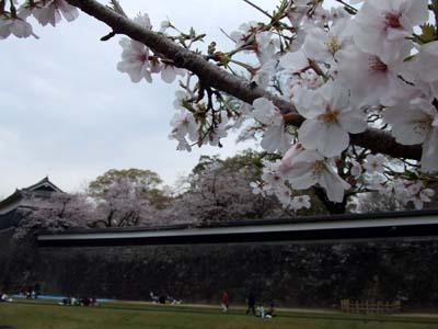 桜の城 .jpg