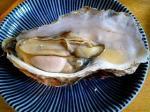 日本列島牡蠣。