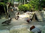 福岡市動植物園4。