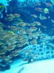 沖縄・那覇のこと-沖縄美ら海水族館。