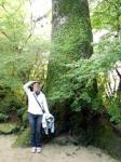 年に9日間だけ公開される佐賀・神埼の九年庵の紅葉。