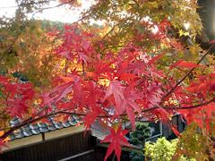 秋月城跡でしっとり秋を感じる…。