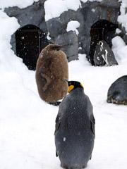 旭川市旭山動物園でゆかいな動物たちとふれあい♪
