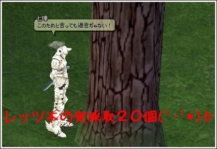 木の実採取