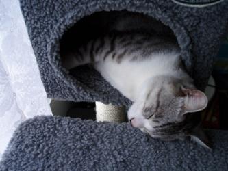 こま 変な寝方2
