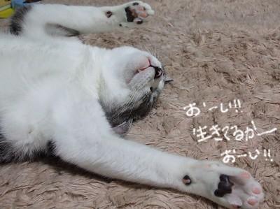 こま寝方2