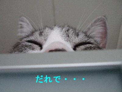 かくれんぼ1-3