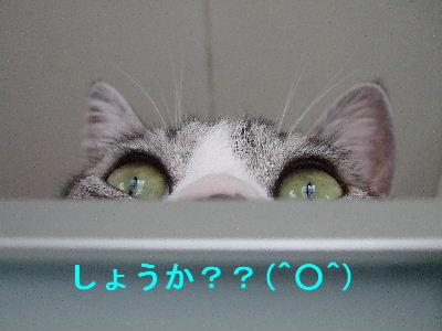 かくれんぼ1-4