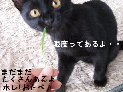 猫草とはな3