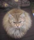 テルテル猫