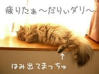 猫の日干し