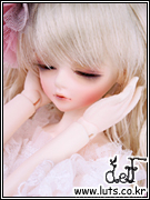 ANEMONE CHERRY DREAMING Limited