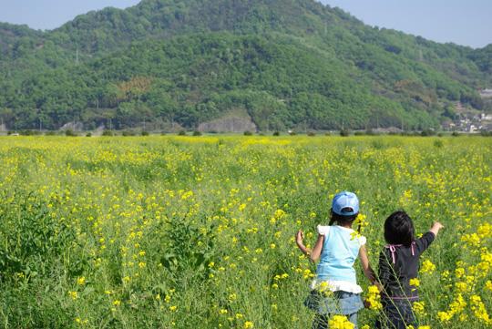 2007.4.29菜の花フェスタ 1