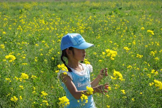 2007.4.29菜の花フェスタ 2