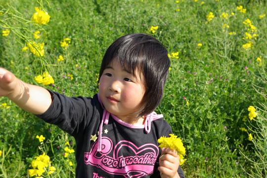 2007.4.29菜の花畑 1