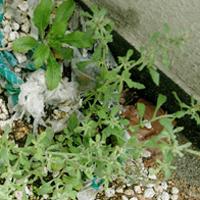 planted0601.jpg