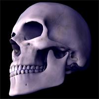 skull0707.jpg