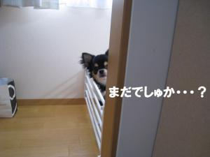 IMG_1014.jpg