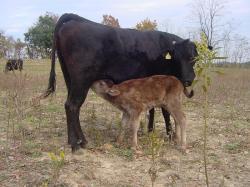 071128和牛 (18)95