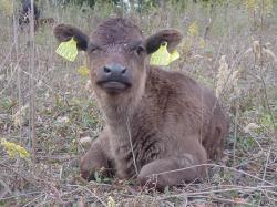 071128和牛 (20)95