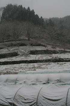 080123雪景色 (8)55
