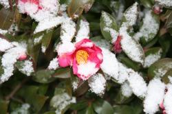 080123雪景色 (2)70