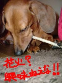 hanabi-kirai-reo.jpg