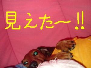 ichigohause-mieta-reo.jpg