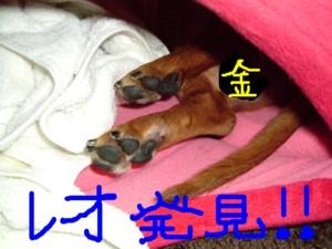 ichigohouse-kinreo.jpg