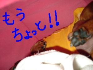 ichigohouse-mouchoi-reo.jpg