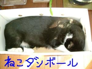 momo-danbo-ru.jpg