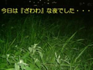 zawawana-yoru-2.jpg