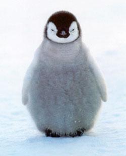 babypenguin.jpg