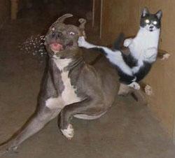 catkicksdog.jpg