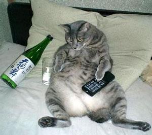 drunkcat.jpg
