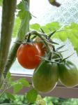庭のプチトマト