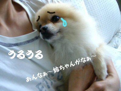 20060730043404.jpg