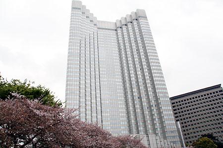 曇天、赤坂、桜吹雪。