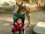 s-やっさんと鹿