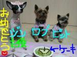ジンの誕生日