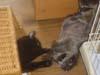 猫と子グマ