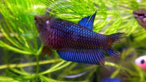 プラ稚魚1-31